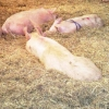 Casos prácticos de adaptación al bienestar animal
