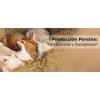 Producción porcina: ¿productividad o rentabilidad?