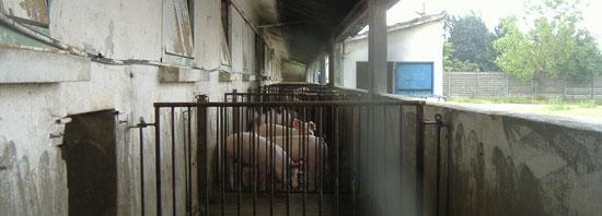 Granja porcina con patio exterior