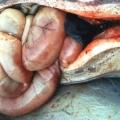 Clostridiosis