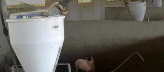 Cerdo y culebra