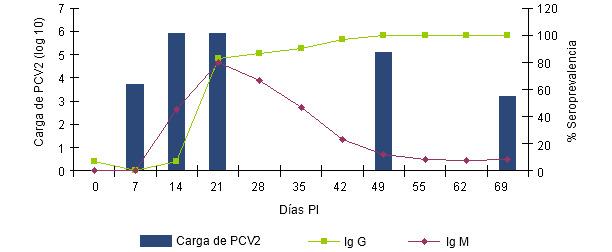 La relación entre el nivel (o % de animales con respuesta positiva) de IgM e IgG es indicativo del momento en que se ha iniciado la infección o circulación vírica