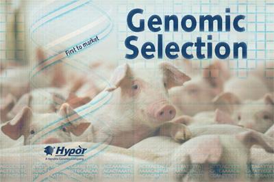 Hypor, los primeros en Selección Genómica