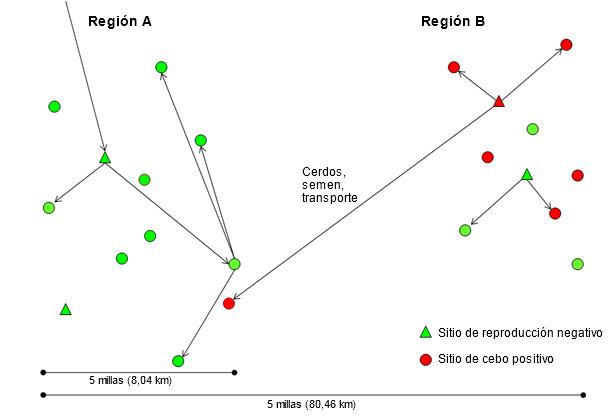 Introducción de una nueva cepa de virus de PRRS de la región B a la A