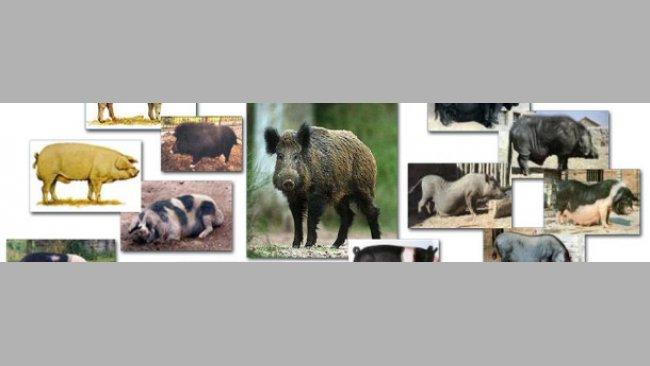 Variación fenotípica