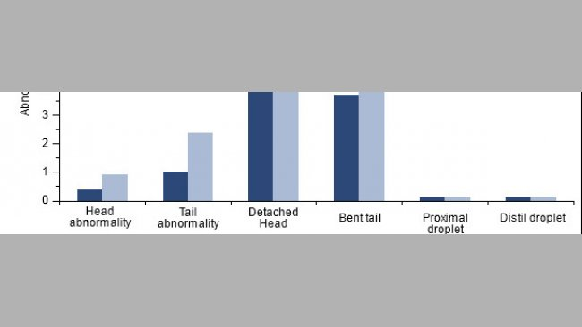 Efecto de la vacunación de machos positivos a PCV2 sobre la morfología espermática