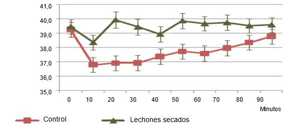 Evolución de la temperatura en lechones secados tras el parto o no