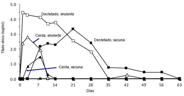 Efecto de la edad del cerdo sobre la multiplicación del PRRSV