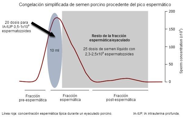 Un típico eyaculado de verraco presenta 3 fracciones distintas dependiendo –entre otros parámetros– de la concentración espermática (representada aquí con una línea roja)