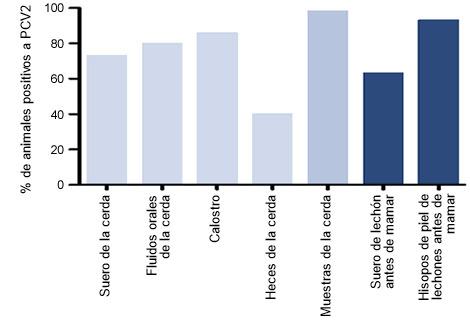 orcentaje de animales positivos a DNA de PCV2