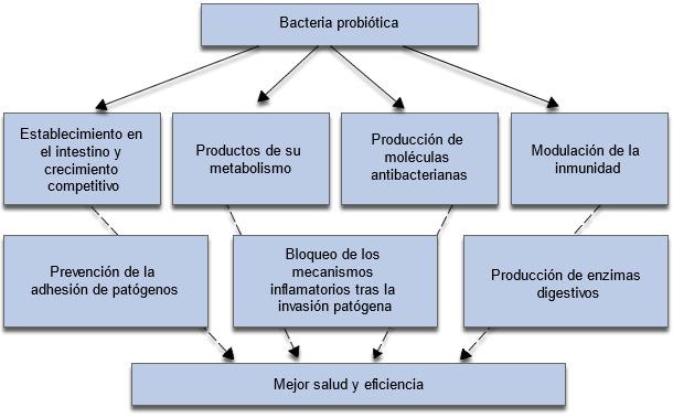 Mecanismos implicados en los efectos positivos de los probióticos sobre el crecimiento y salud de los animales