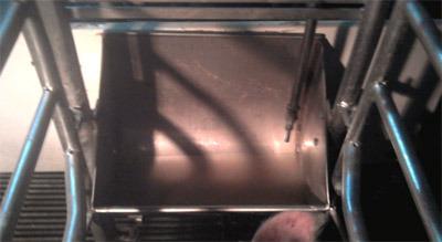 Comedero grande con chupete de alto caudal (7 litros/min). Agujero lateral de mantenimiento de nivel (ß)
