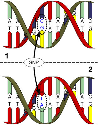 Genomics – linking SNP's with performance