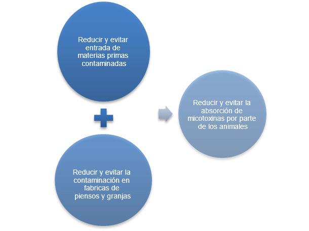 Estrategia prevención de micotoxicosis en producción porcina