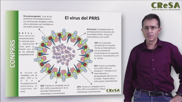 Curso: Bases técnicas para el control práctico del PRRS (12 horas), por el Dr. Enric Mateu