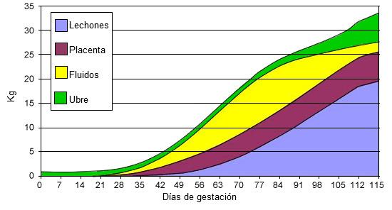 Evolución del peso de los lechones, placentas fluidos y ubre durante la gestación.