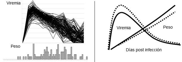 Viremia de PRRSV (figura superior) y distribución de la GMD (inferior) en 200 cerdos infectados experimentalmente con PRRSV.