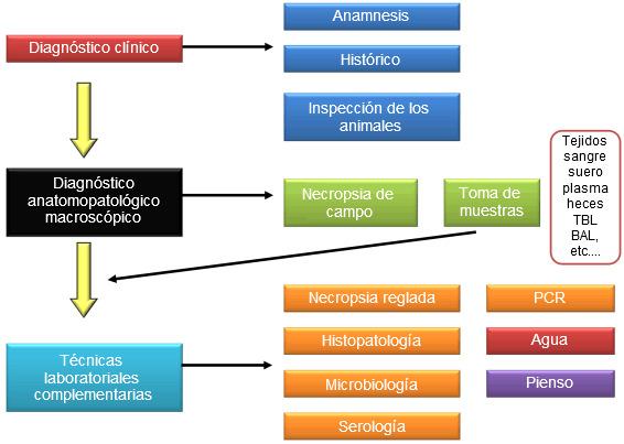 Esquema general del proceso de diagnóstico