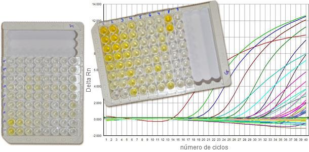 Las serologías frente a PCV2 suelen distinguir entre IgM e IgG y la q-PCR nos da información sobre la carga vírica