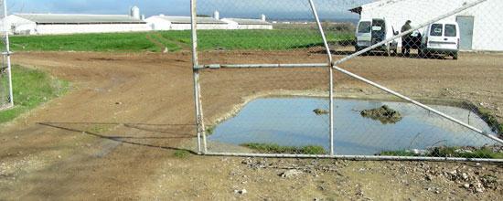 Pediluvio sin uso en una granja de cerdos