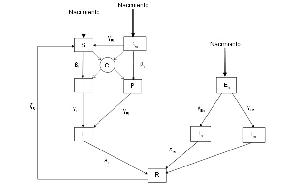 Modelo epidemiológico para la infección por PCV-2