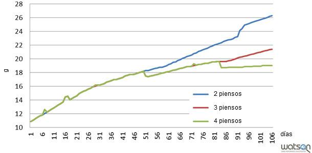 Consumo de lisina ileal estandarizada a lo largo del cebo según diferentes programas de alimentación (2 piensos, 3 piensos, 4 piensos)