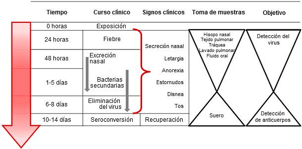 Toma de muestras dirigida a la detección y diagnóstico de la infección por el virus de la influenza A en cerdos