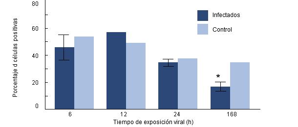 Porcentaje de fagocitosis de H parasuis por macrófagos alveolares porcinos recogidos de cerdos previamente infectados por PRRSv