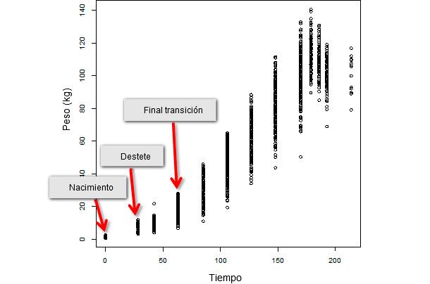 Evolución del peso vivo a lo largo del tiempo de una población entera de destete constituida por 347 animales