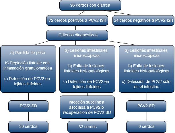 Selección y criterios diagnósticos de cerdos infectados con PCV2