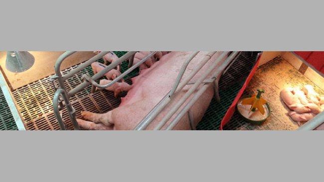 Sistema muy casero, mejorable, para lactación secuencial