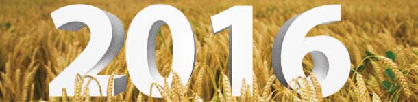 2016, todo el año por delante