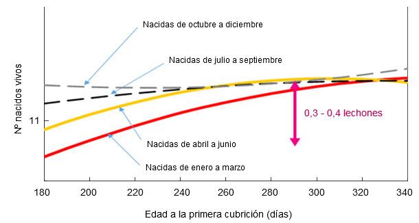 Relación entre el mes de nacimiento y la edad a la primera cubrición con los lechones nacidos vivos en el primer parto