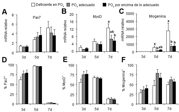 Dietary phosphate treatment effects on genes governing satellite cell proliferation (Pax7) and differenation