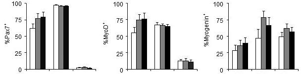 Efecto del fósforo de la dieta sobre los genes que regulan la proliferación (Pax7) y la diferenciación (MyoD, Myogenin) de las células satélite
