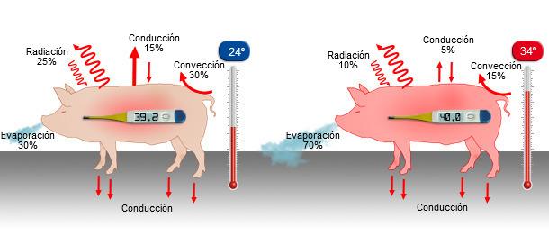 Mecanismos de pérdida de calor a 24º y a 34ºC