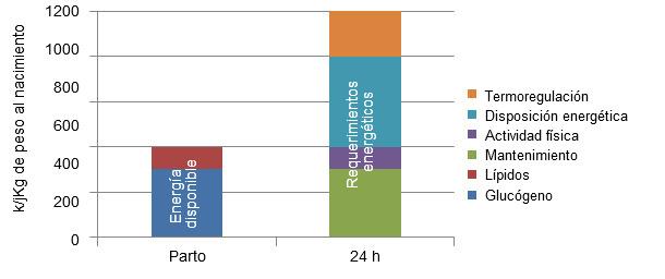 Disponibilidad de energía al nacimiento y requerimientos energéticos a las 24h de vida de un lechón