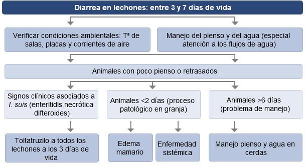 Toma de decisiones ante diarreas en lechones entre 3 y 7días de vida