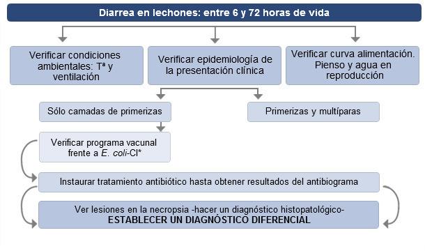 Toma de decisiones ante diarreas en lechones hasta 72 horas de vida