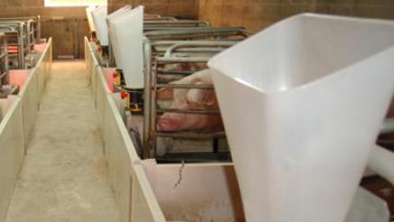 Alimentación ad libitum en lactación