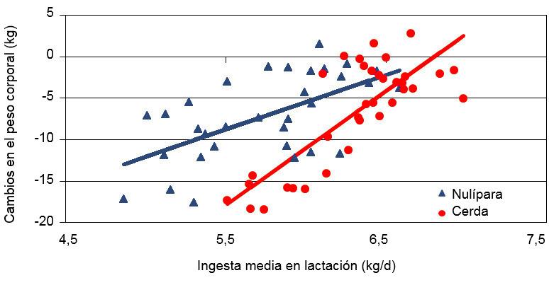 Cambios del peso corporal de las cerdas adultas y primerizas según la ingestia media durante la lactación