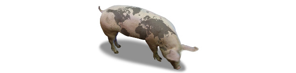 Cerdo con mapa del mundo