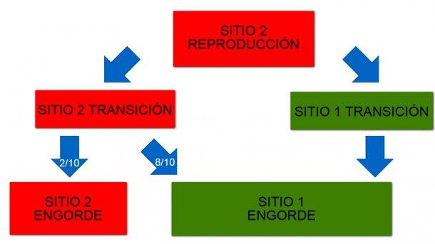 Figura 1: Esquema de los dos sitios de producción y del flujo de animales.