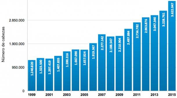 Gráfica 2. Número de cabezas beneficiadas en Colombia entre los años 1999 y 2015. Fuente: Área Económica PorkColombia. Sistema Nacional de Recaudo. Fondo Nacional de la Porcicultura.