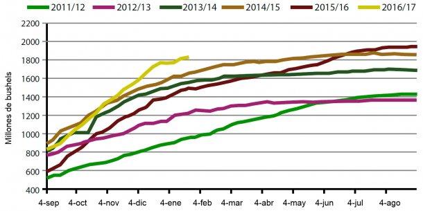 Gráfica 1. Volumen semanal de exportaciones de haba de soja USA, campaña actual y cinco anteriores. Fuente: USDA.