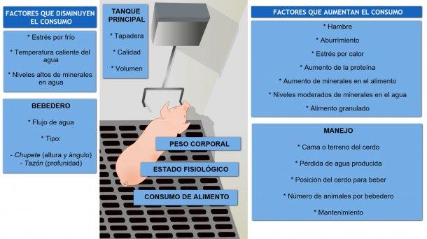 Factores que afectan el consumo de agua en el cerdo
