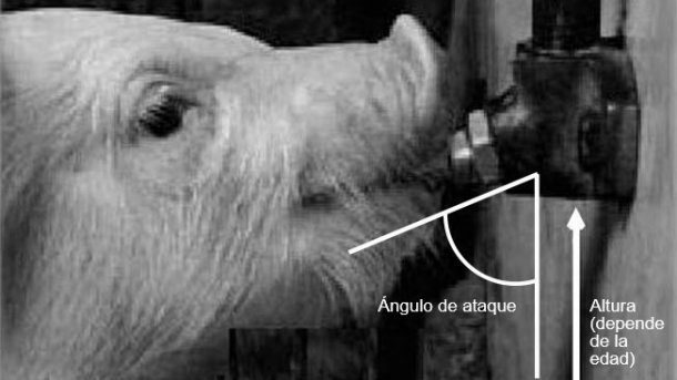 Imagen 2: La altura del bebedero y el ángulo (bebederos de chupete) son los aspectos más importantes del diseño. El diámetro de tubería, la presión y el sistema de válvula determinarán el flujo de agua. Modificado de Ruiz y Manteca (2004); Santomá y Pontes, (2006).