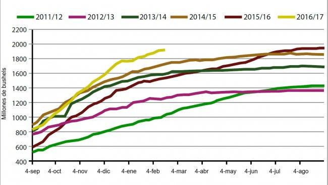 Gráfico 3. Volumen semanal de exportaciones de haba de soja USA en la campaña actual y las cinco anteriores (millones de bushels). Fuente: USDA