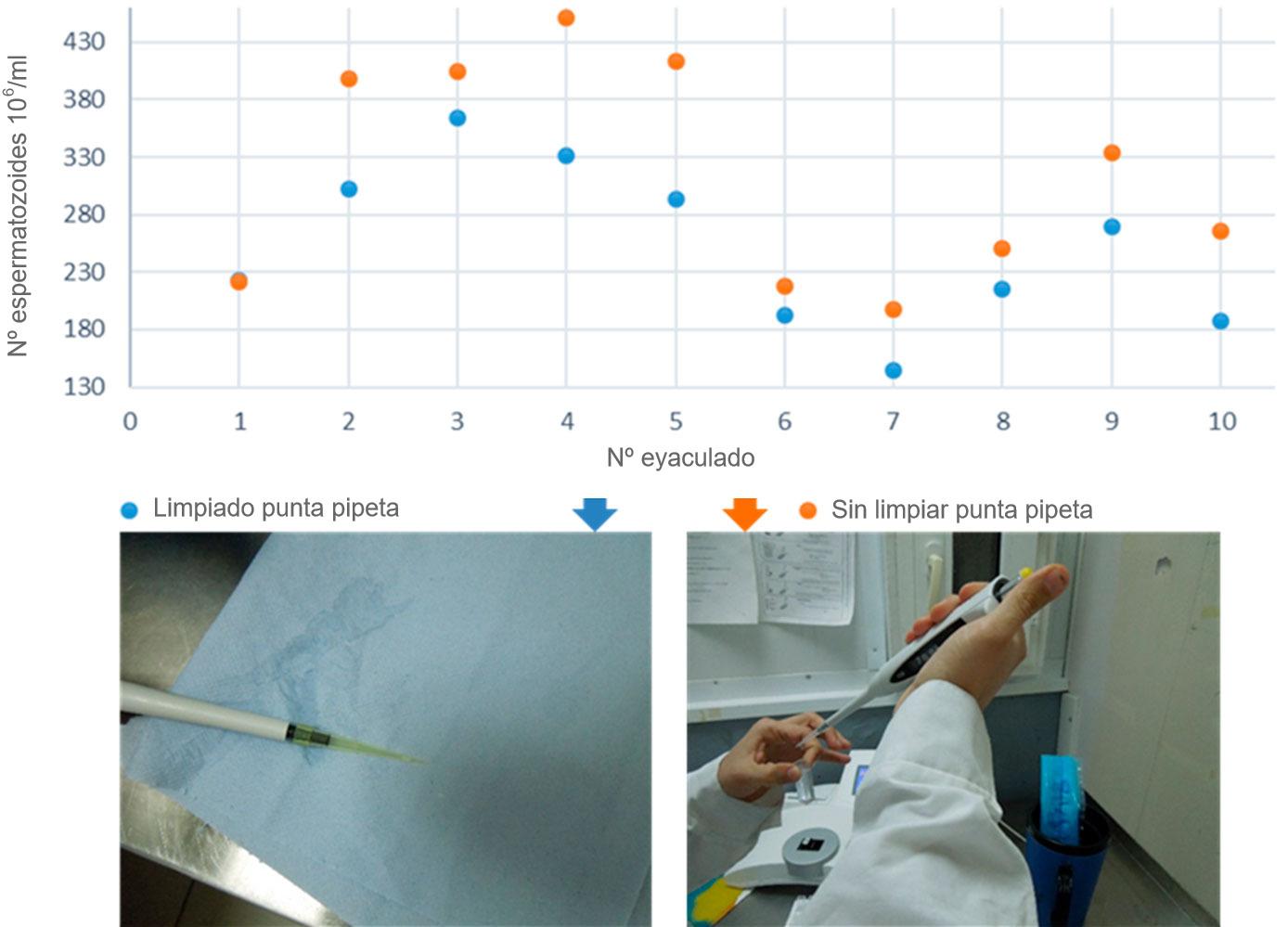 Figura 3. Comparación de la concentración espermática cuando se limpia el semen adherido a las paredes de la punta de la pipeta y cuándo no.