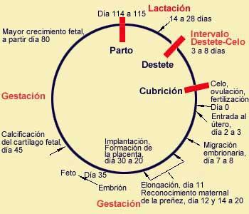 pericriti.jpg (18493 bytes)